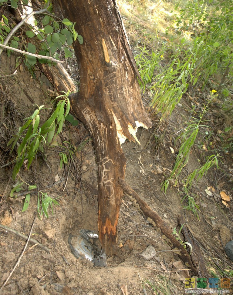 Дерево пробитое соломинкой фото