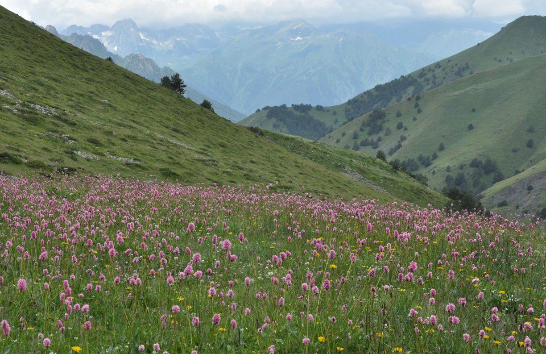 красивая необычная фото алтайских лугов и долин того, многие