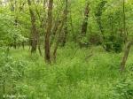 Заросли Краснодворского сада